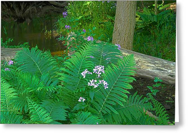 Ferns And Phlox Greeting Card by Michael Peychich