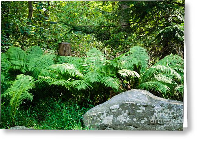 Ferns  At The Edge Of The Woods Greeting Card by Anne Boyes