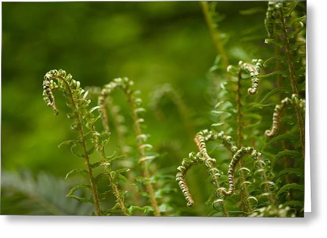 Ferns Fiddleheads Greeting Card by Mike Reid