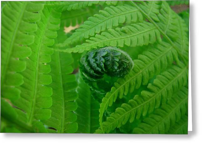 Ferns Fine Art Prints Green Forest Fern Greeting Card by Baslee Troutman