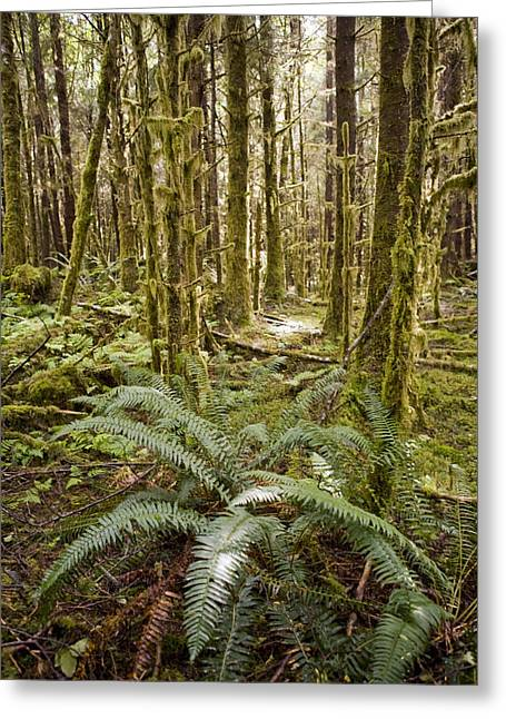 Ferns Sit On The Forest Floor Greeting Card by Taylor S. Kennedy