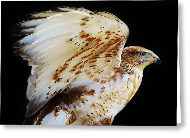 Ferruginous Hawk Greeting Card by Paulette Thomas