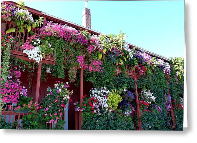 Festooned In Flowers Greeting Card by Will Borden