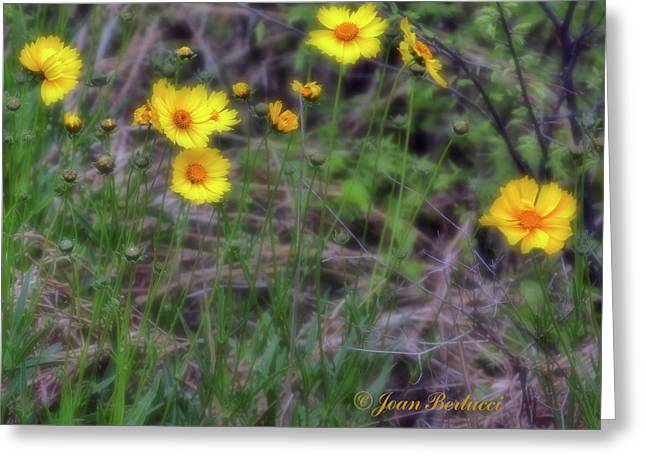 Greeting Card featuring the photograph Field Flowers by Joan Bertucci