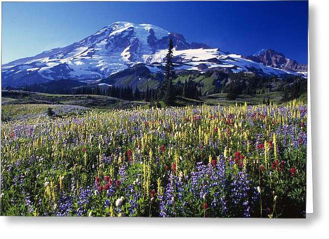 Field Of Blooming Wildflowers In Greeting Card by Natural Selection Craig Tuttle