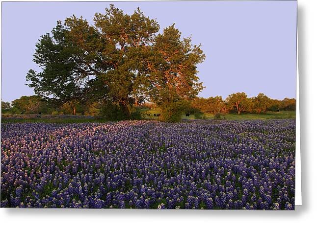 Greeting Card featuring the photograph Field Of Blue by Susan Rovira