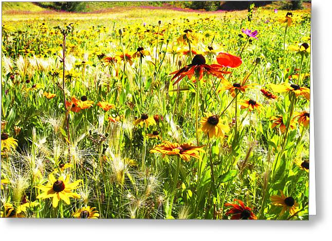 Field Of Bright Colorful Wildflowers Greeting Card by Anne Mott