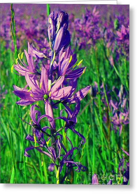 Greeting Card featuring the photograph Field Of Camas In Oregon by Mindy Bench