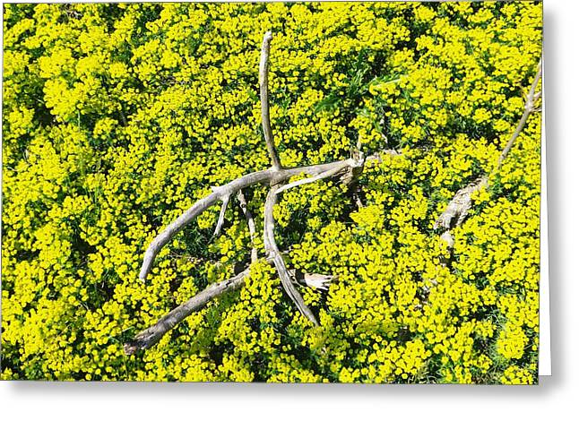 Greeting Card featuring the photograph Field Of Flowers 3 by Gerald Strine