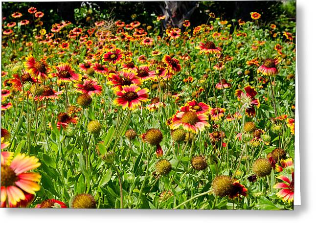 Field Of Flowers Greeting Card by Mike Rivera
