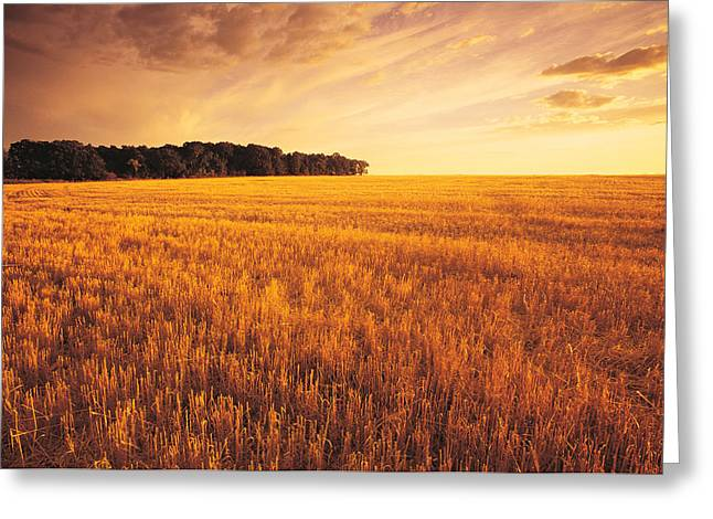 Field Of Grain Stubble Near St Greeting Card by Dave Reede