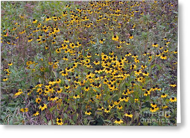 Field Of Suzies Greeting Card by Cedric Hampton