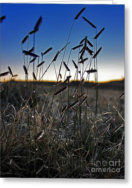 Field Of Wierdness Greeting Card by Wesley Hahn
