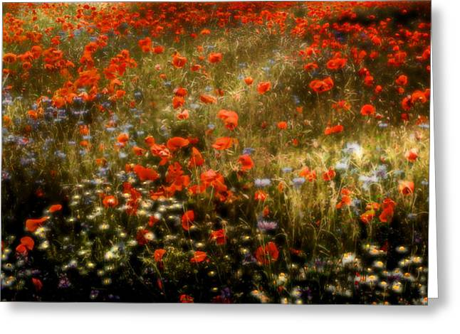 Field Of Wildflowers Greeting Card by Ellen Heaverlo