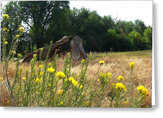 Field Of Yellow Sage In Lakewood Colorado Greeting Card by Gretchen Wrede