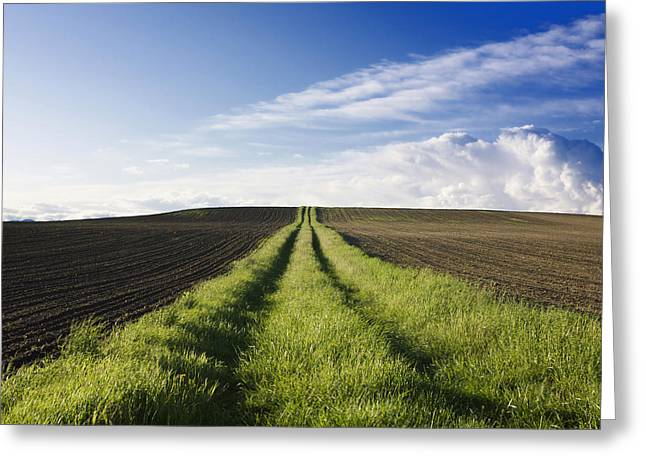 Field Path In Limagne. Auvergne. France. Europe Greeting Card by Bernard Jaubert