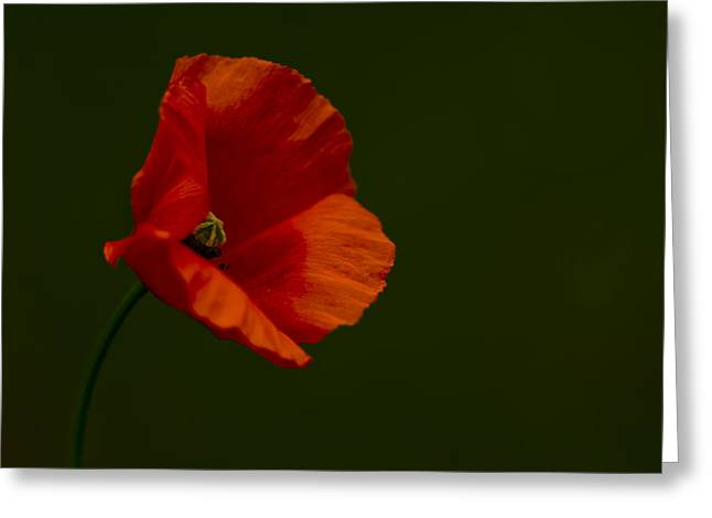 Greeting Card featuring the photograph Field Poppy by Rob Hemphill