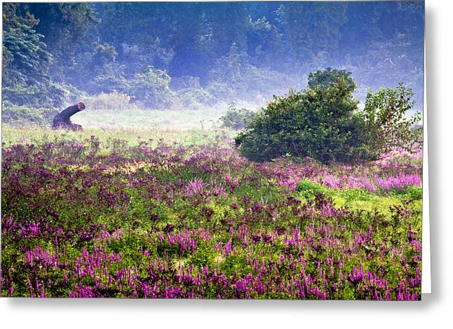 Field With Purple Flowers Greeting Card by Brian Lee