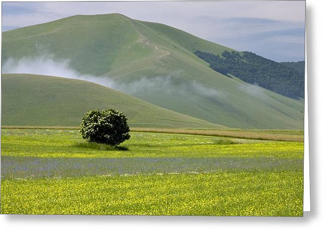 Fields Full Of Cornfield Weeds Greeting Card by Bob Gibbons
