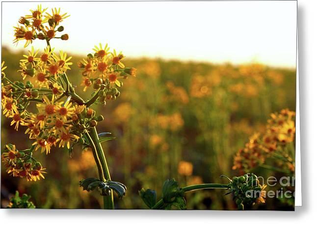 Fields Greeting Card by Jessica Smith