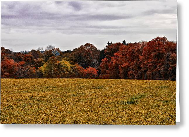 Fields Of Gold Greeting Card by Bill Cannon