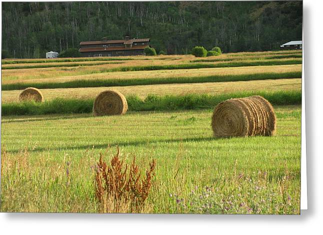Fields Of Gold Greeting Card by Shawn Hughes