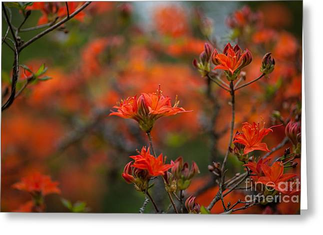 Fiery Spring Greeting Card