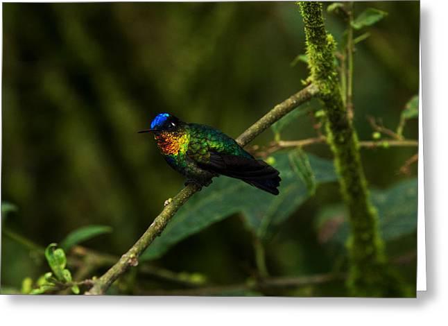 Fiery-throated Hummingbird Greeting Card