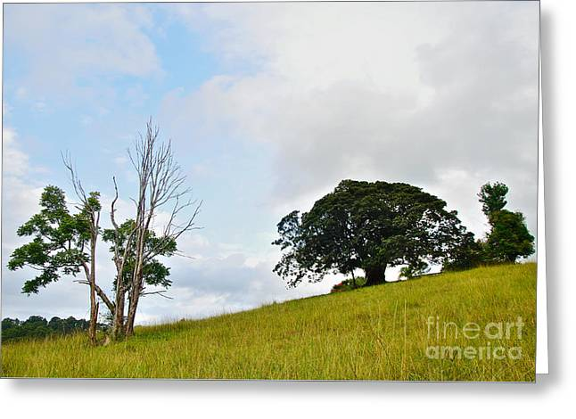 Fig Tree On A Hill Greeting Card by Kaye Menner
