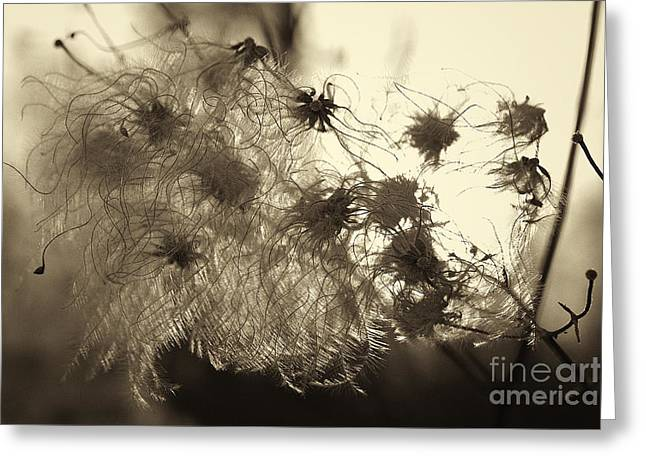 Greeting Card featuring the photograph Filaments by Eunice Gibb