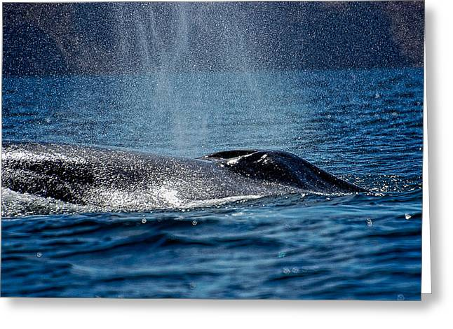 Greeting Card featuring the photograph Fin Whale Spouting by Don Schwartz