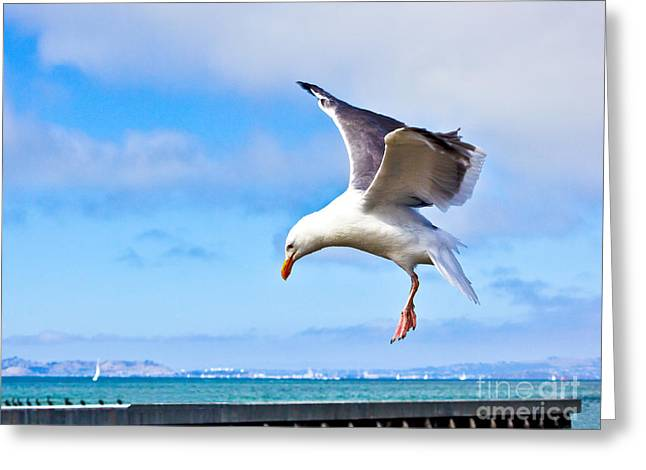 Final Approach - San Francisco Greeting Card
