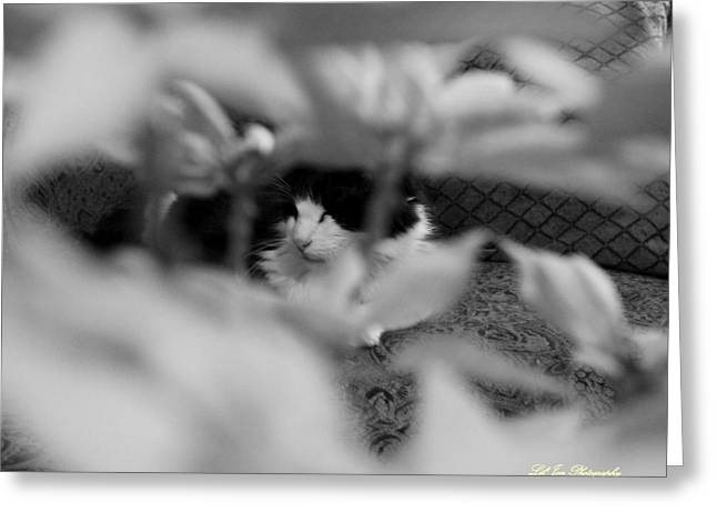 Greeting Card featuring the photograph Find The Kitty by Jeanette C Landstrom