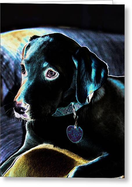 Fine Art Puppy Portrait Greeting Card by Linda Phelps