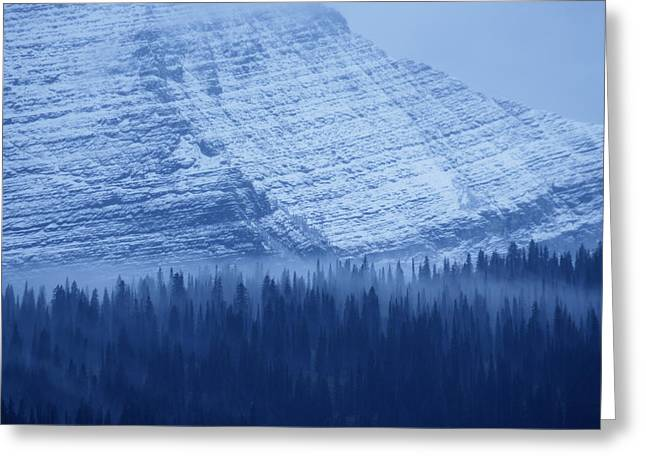 Fir And Spruce Tower Over The Forest Greeting Card by Michael Melford