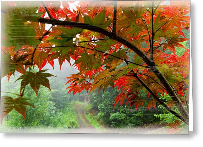 Fire Fog Greeting Card by Debra and Dave Vanderlaan