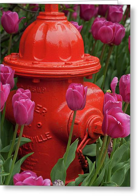 Fire Plug And Tulips Greeting Card