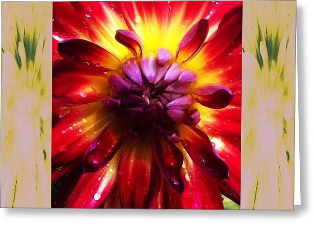 Firecracker Dahlia... Greeting Card by Rene Crystal