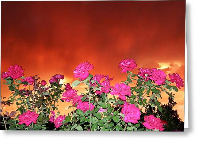 Greeting Card featuring the photograph Firery Roses by Wendy McKennon