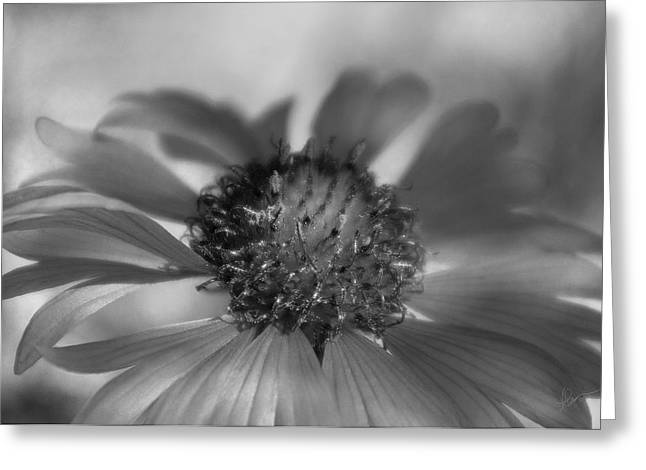 Greeting Card featuring the photograph Firewheel In Mono by Vicki Pelham