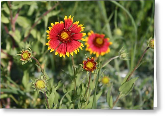 Greeting Card featuring the photograph Firewheel by Lynnette Johns