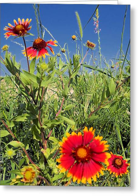 Greeting Card featuring the photograph Firewheels Galour by Lynnette Johns