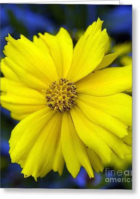 Firey Yellow Flower Greeting Card