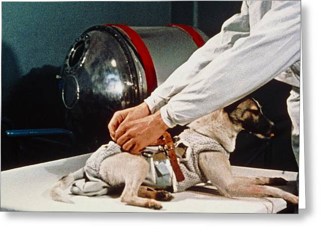 First Animal In Space: Laika The Soviet Space Dog. Greeting Card