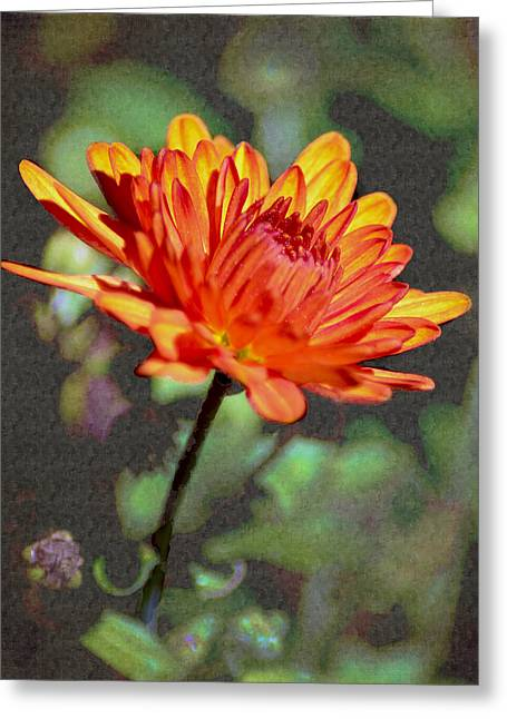 First Mum For Fall Greeting Card by Sandi OReilly