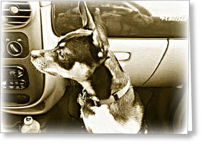 Greeting Card featuring the photograph First Ride Home by Pamela Hyde Wilson