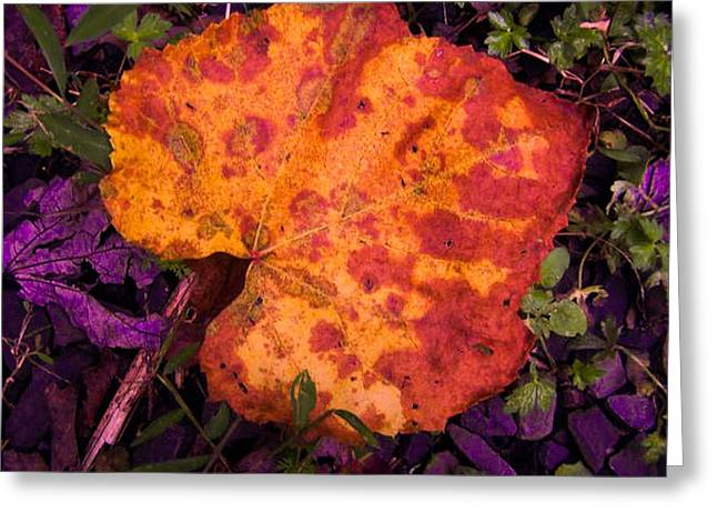 First Sign Of Autumn Greeting Card by Gordon H Rohrbaugh Jr