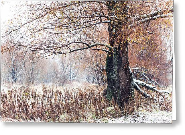 First Snow. Old Tree Greeting Card