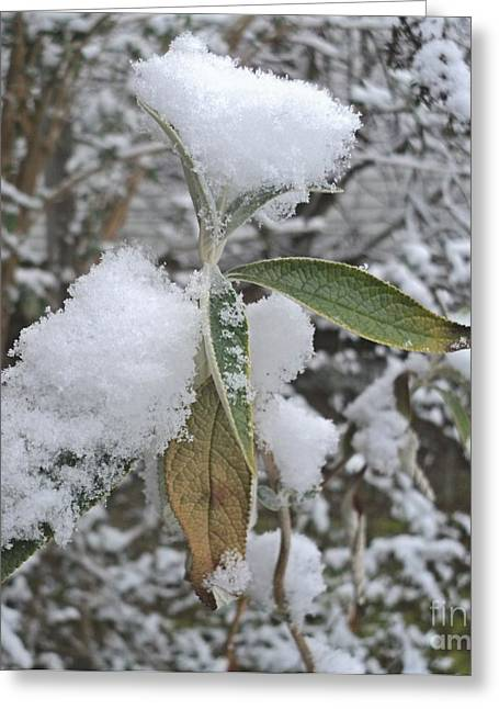 First Snow On Leaves Greeting Card by Padre Art