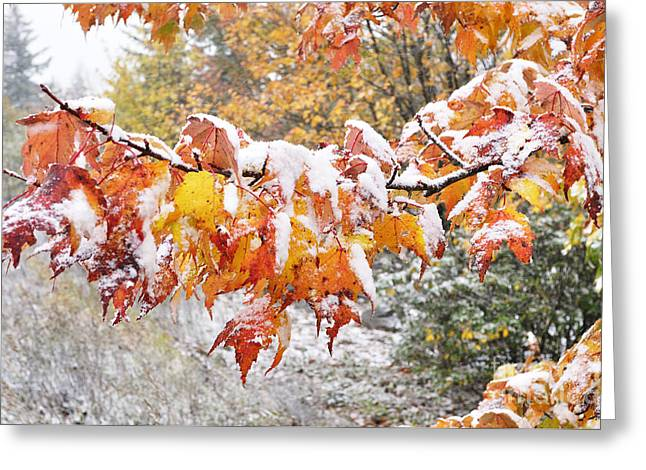 First Snow Greeting Card by Thomas R Fletcher
